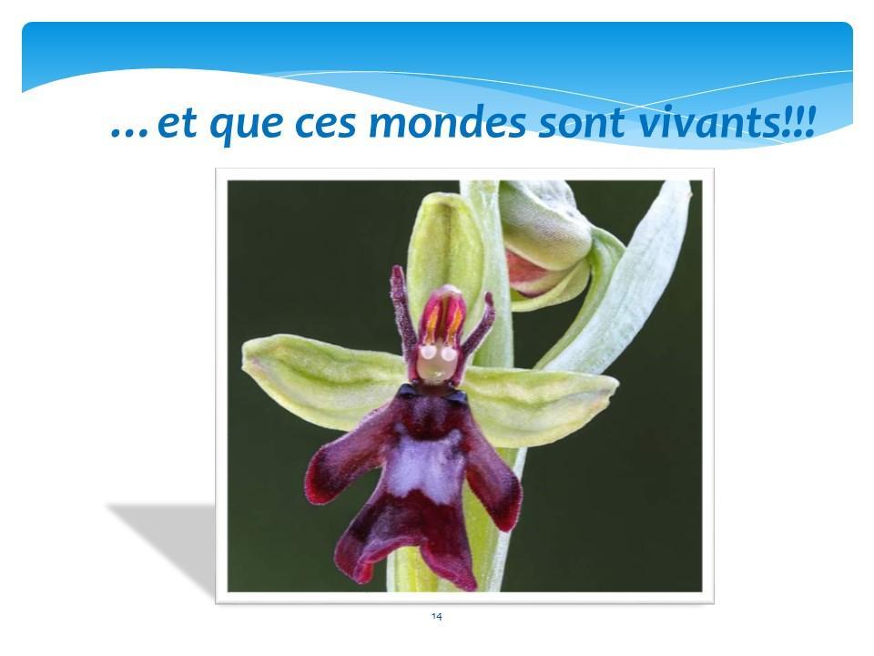 Diapositive14 1